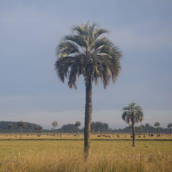 Uruguay und seine Rinder. Foto: Privat