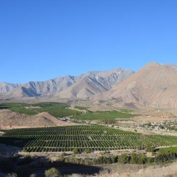 Das Valle Del Elqui liegt im Norden Chiles. Foto: Privat
