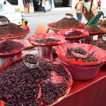 In Mexico gibt es auch Exotisches zu kaufen - die Chapulines, zu Deutsch Heuschrecken, zum Beispiel. Foto: Privat