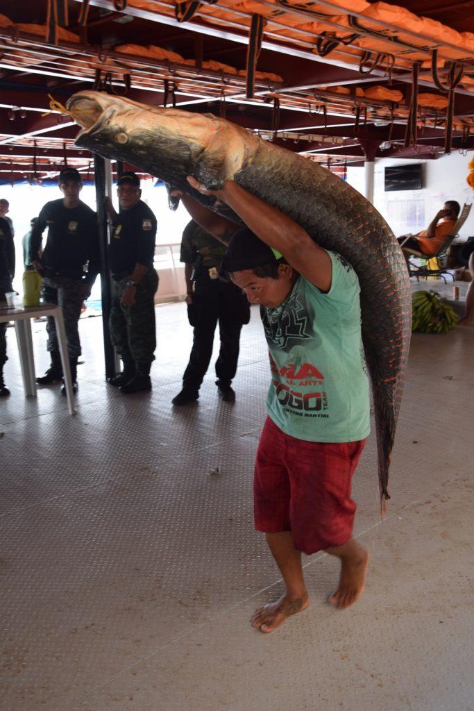Der Pirarucu, zu Deutsch Arapaima, ist der größte Süßwasserfisch der Welt. Foto: Privat