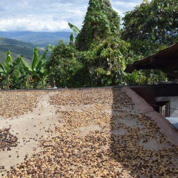 Kaffeebohnen werden traditionell auf dem Hausdach getrocknet. Foto: Privat