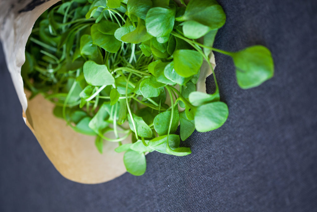 Portulak – in Suppen, Dips oder als Salat