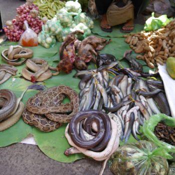 Auch Schlangen stehen in Kambodscha auf der Speisekarte, sind aber nur auf speziellen Märkten erhältlich. Foto: Privat