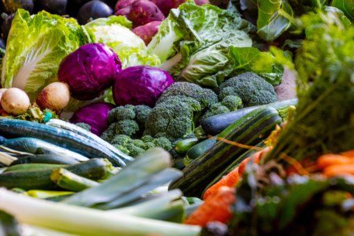 Rein pflanzlich für Gastronomie und Gemeinschaftsverpflegung