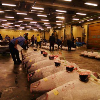 9. Tunfisch Auktion