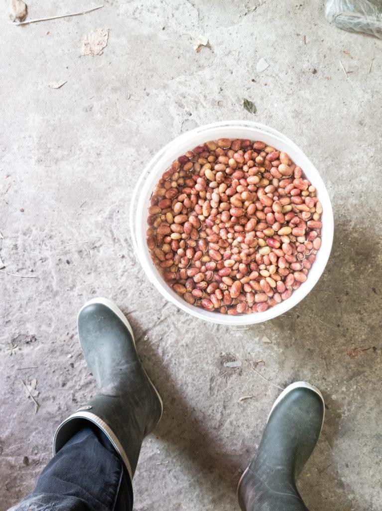YCU: Das gewisse Etwas mit Nachhaltigkeitsfaktor – Fermentierung